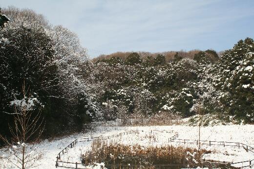 雪よこやま1.jpg