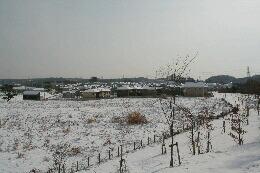 雪よこやま3.jpg